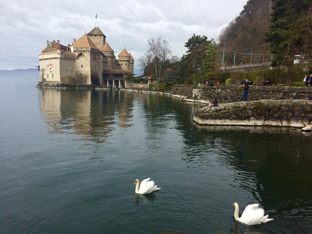 EPFL - Chateau de Chillon Swan